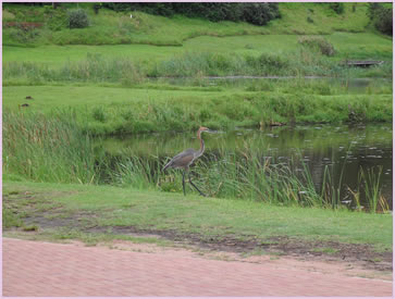 There are a variety of different bird types in the Zimbali Coastal Resort